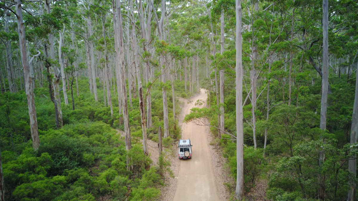Karri Forest - WA Experts